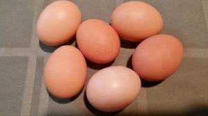 cruelty-free-eggs